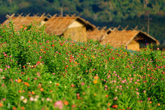 Flowers field in summer time and huts Stock Photo
