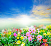 Flowers field in sunshine Stock Photos