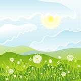 Flowers in the field, vector Stock Photos