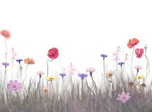 Flowers in a field. Wildflowers bloom in a field on white background royalty free stock image
