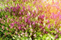 Flowers fields. Royalty Free Stock Photos