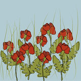 Flowers fields. Many flowers of red poppy on light green background Royalty Free Stock Photos