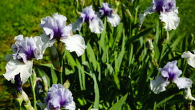 The flowers in the fields and meadows of Europe in the spring on a Sunny day stock video footage
