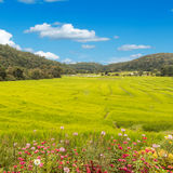 Flowers and Fields in the mountains Royalty Free Stock Photos