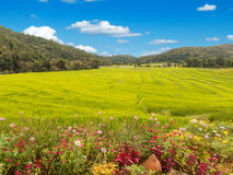 Flowers and Fields in the mountains Stock Image