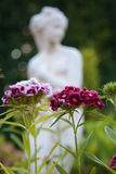 Flowers with a figurine. Purple flowers in a garden with a lady figurine out of focus in the background Stock Photos