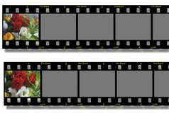 Flowers filmstrip. Birthday background royalty free illustration