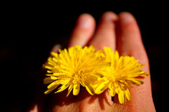 Flowers between fingers Royalty Free Stock Photos