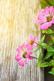 Flowers flare sunlight effect Stock Images
