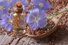 Flowers flax, seeds and oil in a bottle horizontal Royalty Free Stock Image
