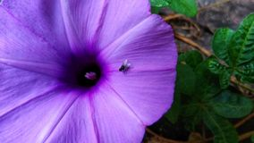 Flowers with flies. Flies are relaxing in beautiful flowers stock image