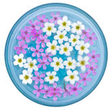 Flowers Floating in a Bowl Stock Photos