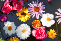 Flowers floating in a pond Stock Images
