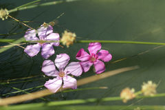 Flowers floating by the river bank Stock Photos