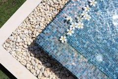 Flowers floating in swimming pool. Frangipani flowers floating in swimming pool Royalty Free Stock Image