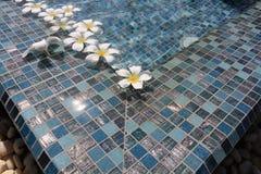 Flowers floating in swimming pool. Frangipani flowers floating in swimming pool Stock Image