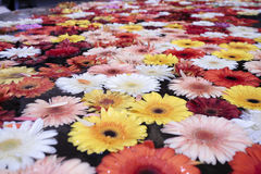 Flowers floating on water Stock Images