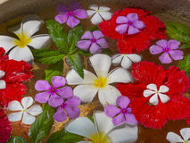 Flowers floating on water. Colorful flower petals floating in water, closeup Royalty Free Stock Image