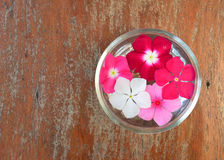 Flowers floating  water Royalty Free Stock Photos