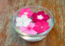 Flowers floating  water in glass Royalty Free Stock Image