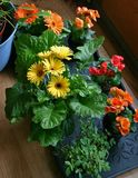 Flowers on floor. Flowers waiting to be potted Royalty Free Stock Photography