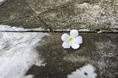 Flowers on the floor Stock Photography