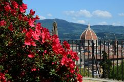 Flowers with Florence royalty free stock photography
