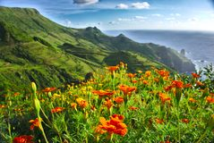 Flowers on Flores, Azores, Portugal royalty free stock photos