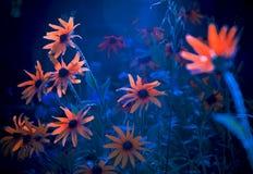 Flowers flourescent Stock Photos