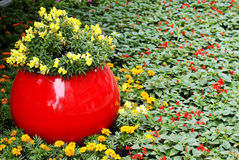 Flowers with flower bed flowerbed Stock Photography