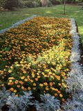 Flower bed. Of pansies Stock Photos