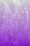 Flowers. Flower on blurry color background Royalty Free Stock Images