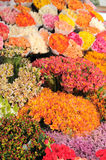 Flowers in the flower market. Bunches of flowers in the flower market Stock Images