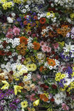 FLOWERS. Flower Market in mallorca, 2016 Stock Photography