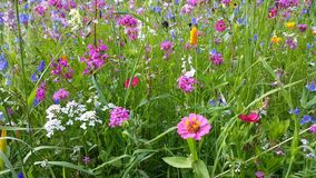 Flowers in the flower meadow. Are moving in the wind stock video