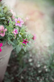 Flowers in flower pot on blurred garden background Royalty Free Stock Photography