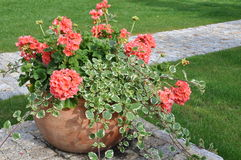 Flowers in flower pot Stock Photos