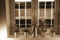 Flowers in flower pots and watering can on window ledge. Tillandsia flower and tulips. Add Sepia effect. Flowers in flower pots and watering can on window ledge Royalty Free Stock Image