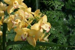 Flowers. Flower radiating joy, spring and life stock photos