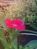 Flowers. Flower sun pink skyblue Royalty Free Stock Images