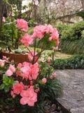 Flowers. Flower sun pink skyblue Stock Photography