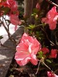Flowers. Flower sun pink skyblue Royalty Free Stock Photos