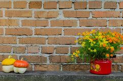 Flowers in flowerpot on the brick wall background Royalty Free Stock Images
