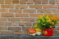 Flowers in flowerpot on the brick wall background Royalty Free Stock Photography