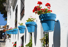 Flowers in flowerpot on wall Royalty Free Stock Images