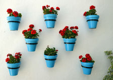 Flowers in flowerpot on wall Stock Photography