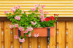 Flowers in a flowerpot. Flowers in a flowerpot on the wall of the garden house Royalty Free Stock Photography