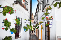 Flowers flowerpot on the walls on streets of Cordoba. Spain royalty free stock photos