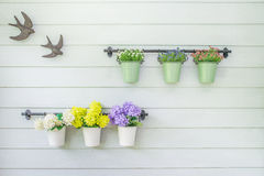 Flowers in flowerpot on wooden wall Stock Photo