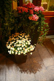 Flowers in flowerpots at night Royalty Free Stock Photography